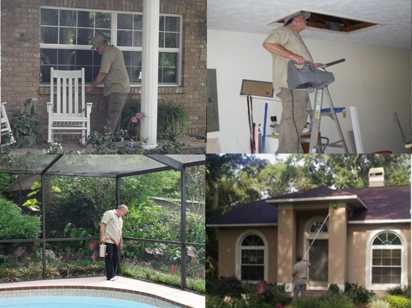 annual pest control in tampa fl